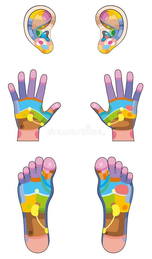 La réflexothérapie répartit en zones des pieds de mains d'oreilles illustration de vecteur