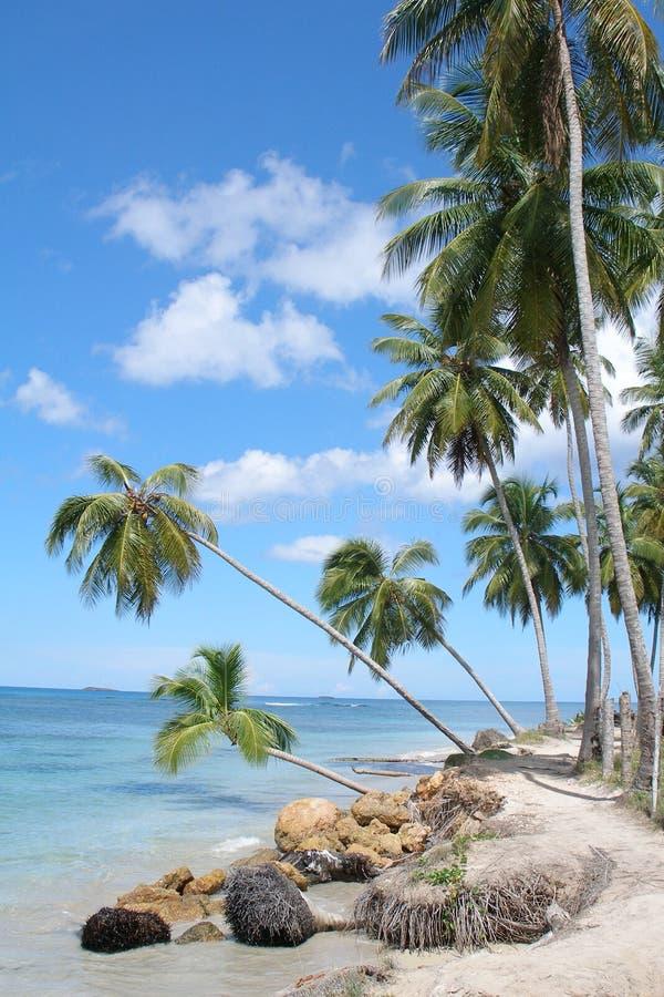 la république dominicaine de plage photo stock