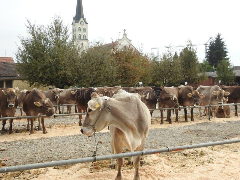 Download La réunion des vachers photo stock. Image du juste, engagement - 87705156