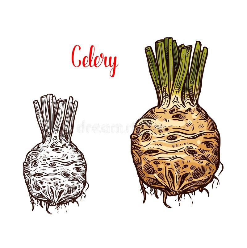 La raíz de apio fresca bosqueja color y monocromo stock de ilustración