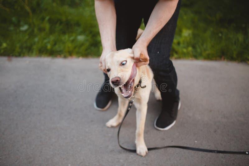 La rabia es un perro fotografía de archivo