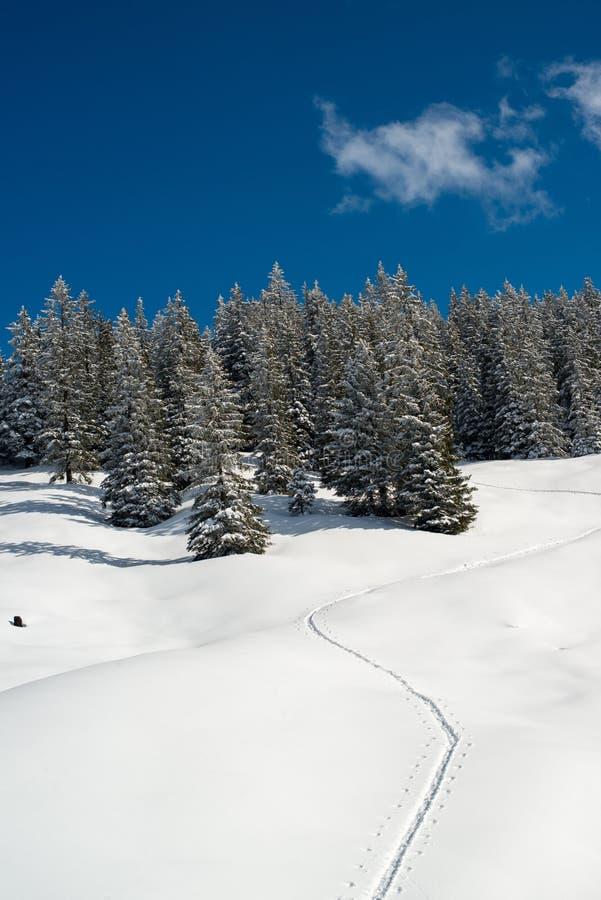 Tracce della racchetta da neve fotografie stock