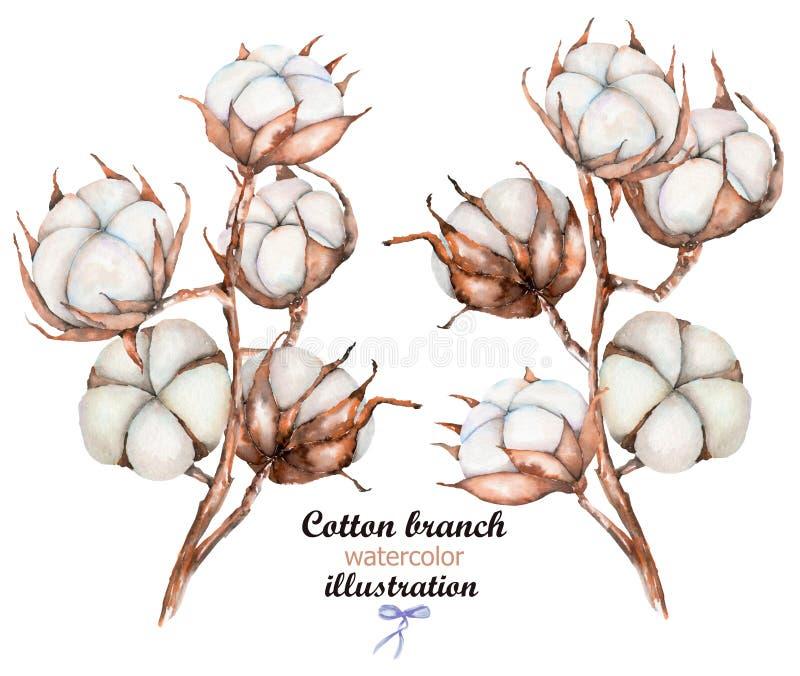 La raccolta delle illustrazioni del cotone dell'acquerello fiorisce i rami illustrazione di stock