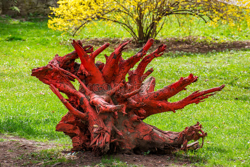 La racine morte rouge d'arbre photo stock