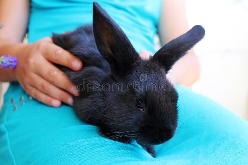 La ragazza abbraccia poco animale domestico del coniglio in mani fotografia stock libera da diritti