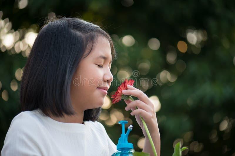 La ragazza asiatica sta odorando il fiore della margherita all'aperto fotografie stock