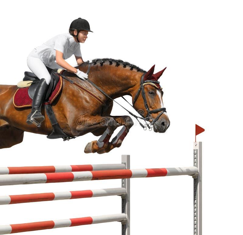 La ragazza che salta con il cavallo di baia fotografia stock libera da diritti