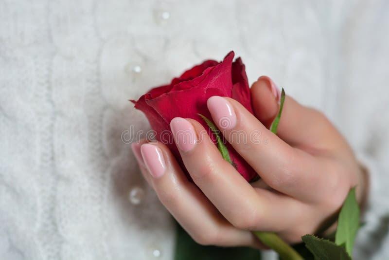 La ragazza con le unghie di colore di rosa di bambino lucida delicatamente la tenuta della rosa rossa immagini stock