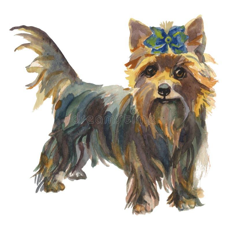 La ragazza 2 del cucciolo dell'Yorkshire terrier illustrazione vettoriale