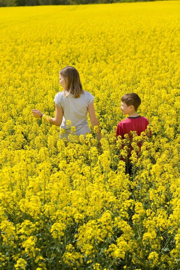 La ragazza ed il ragazzo, il fratello e la sorella godono della natura Camminano fra il campo fiorito giallo fotografie stock libere da diritti