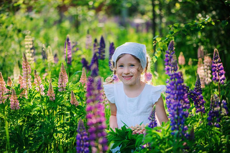 La ragazza felice del bambino con il lupino fiorisce sul campo soleggiato dell'estate immagini stock libere da diritti