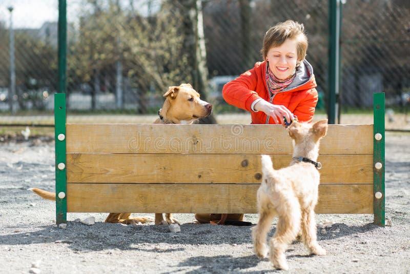La ragazza gioca con due cani vicino alla barriera fotografia stock libera da diritti