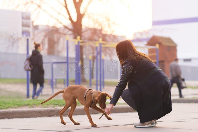 La ragazza gioca con un cane su una passeggiata Una donna sta camminando un cucciolo Pets il concetto fotografie stock libere da diritti