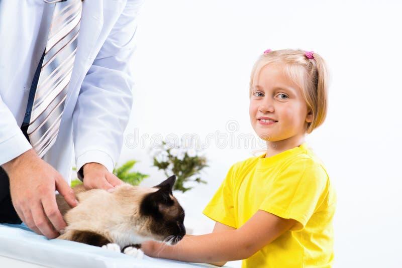 La ragazza ha portato il gatto al veterinario fotografia stock