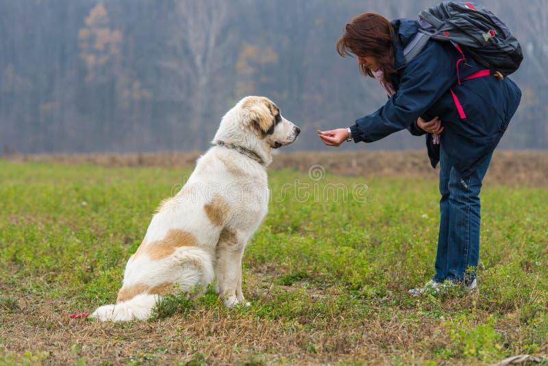 La ragazza motiva il suo cane di pastore di Bucovina fotografia stock
