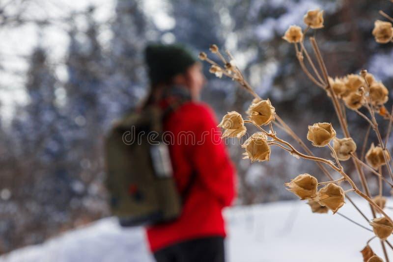 La ragazza nella foresta di inverno nel defocus Fiori secchi nella priorità alta fotografia stock