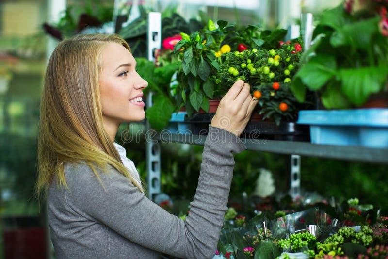 La ragazza sceglie i fiori immagine stock libera da diritti