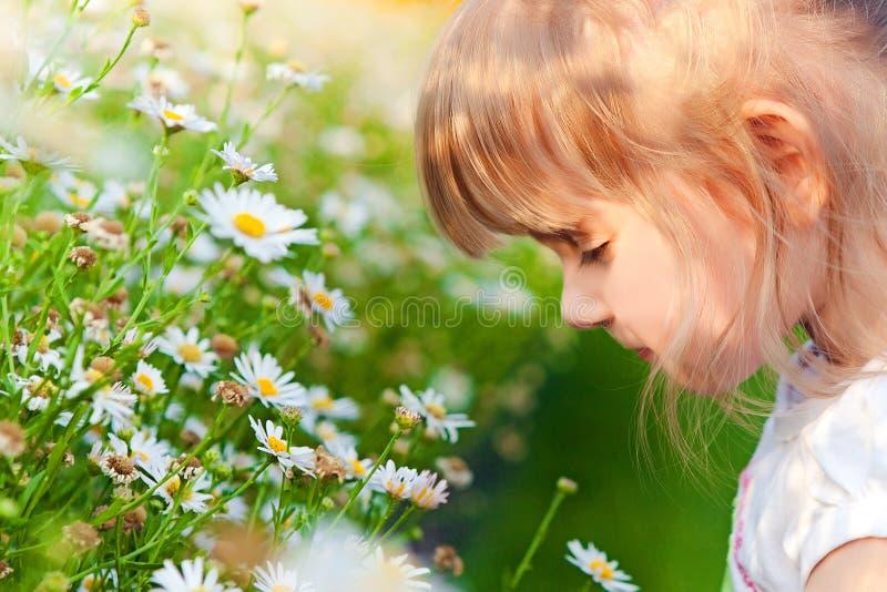 La ragazza sente l'odore dei camomiles fotografie stock libere da diritti