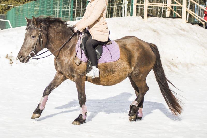 La ragazza smonta un cavallo La ragazza sul cavallo la bambina sta montando un cavallo Resto nella sosta immagini stock