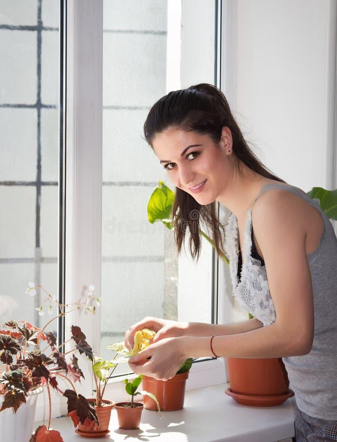 La ragazza sorridente spolvera le piante della finestra fotografie stock libere da diritti