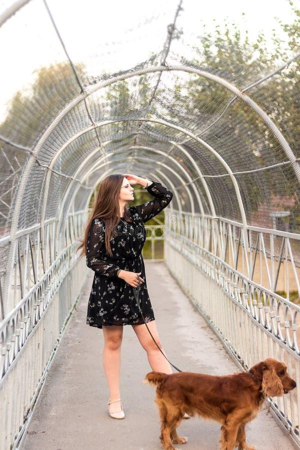 La ragazza sta camminando il cane su un guinzaglio nel parco della città, il cane è stante e guardante con la curiosità e l'inter fotografie stock libere da diritti