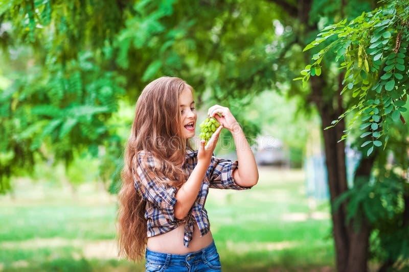 La ragazza sta tenendo l'uva, un fuoco sull'uva verde Bella piccola ragazza dell'agricoltore che mangia l'uva organica Il concett immagine stock libera da diritti