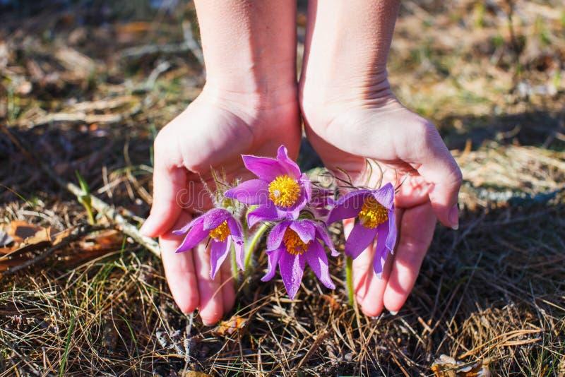 La ragazza sta tenendo un'erba di sogno immagine stock libera da diritti