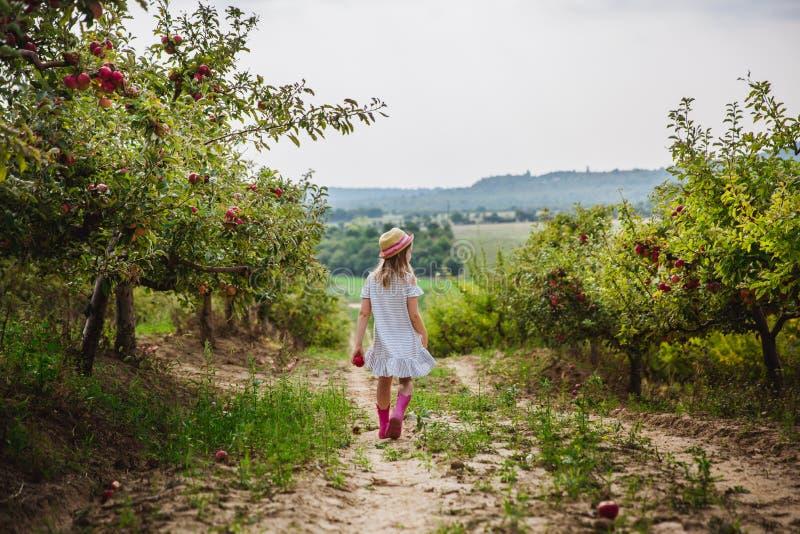 La ragazza in stivali di pioggia e del cappello cammina con la mela dolce nel meleto fotografia stock