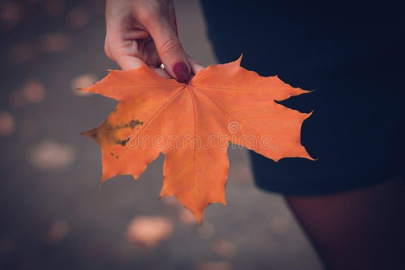 La ragazza tiene in sua mano una foglia di acero di colore arancio fotografie stock