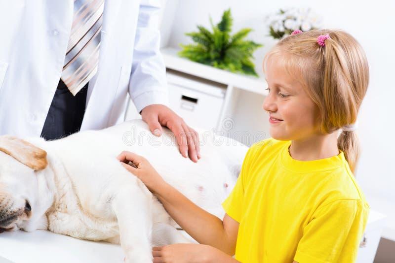 La ragazza tiene un cane in una clinica veterinaria fotografie stock