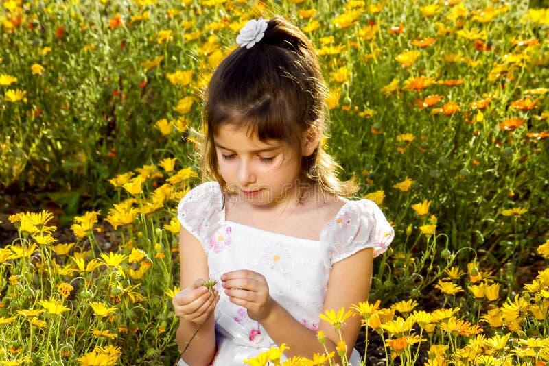 La ragazza tira i petali fuori da un Wildflower fotografia stock