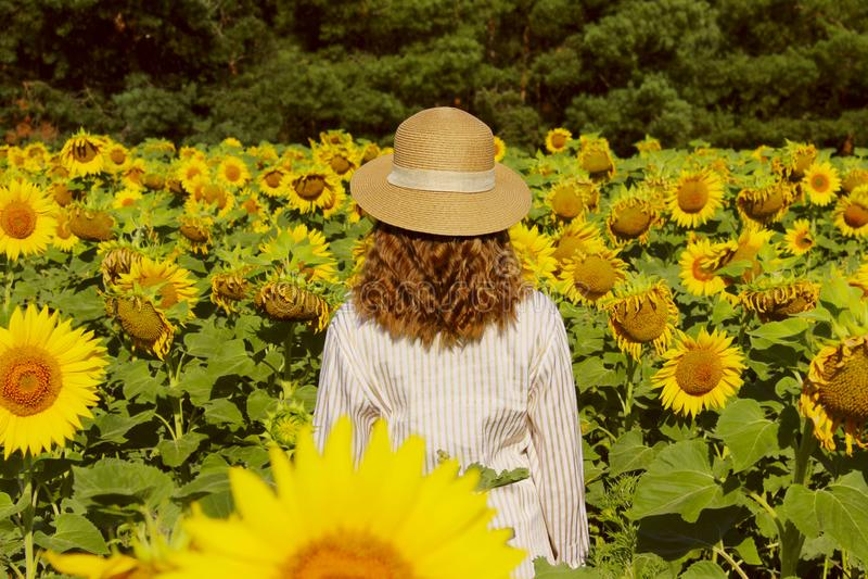 La ragazza in un cappello di paglia sta stando in un grande campo dei girasoli Giovani adulti Vista posteriore fotografia stock