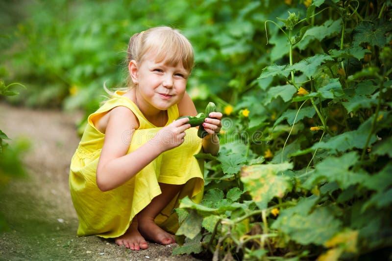 La ragazza in un vestito giallo si siede in un orto domestico e tiene un cetriolo a disposizione fotografie stock libere da diritti