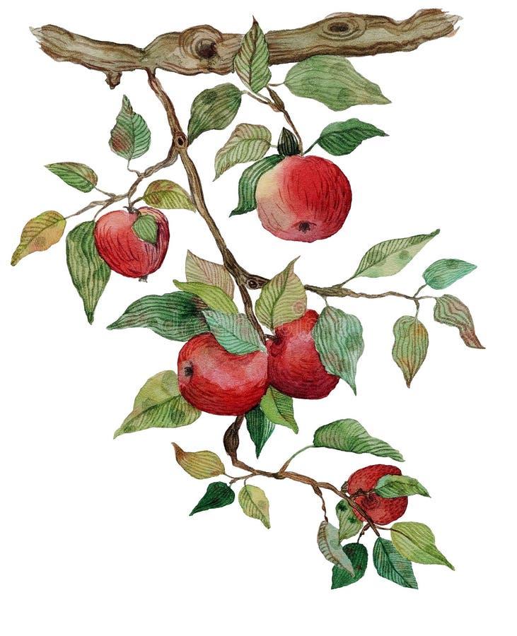 La rama de Apple con la acuarela de las manzanas estilizó el ejemplo aislado libre illustration