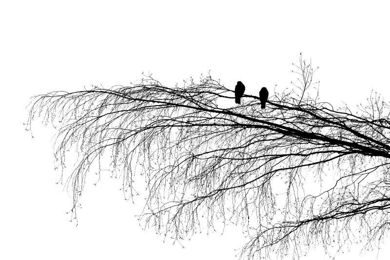 La rama de la reconciliación imagen de archivo