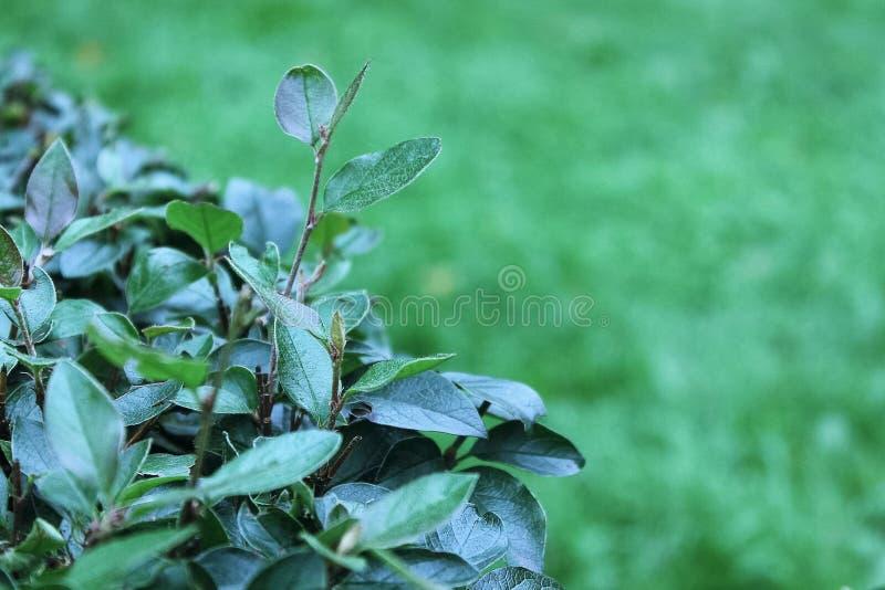 Download La rama de un arbusto foto de archivo. Imagen de ramificación - 100532164