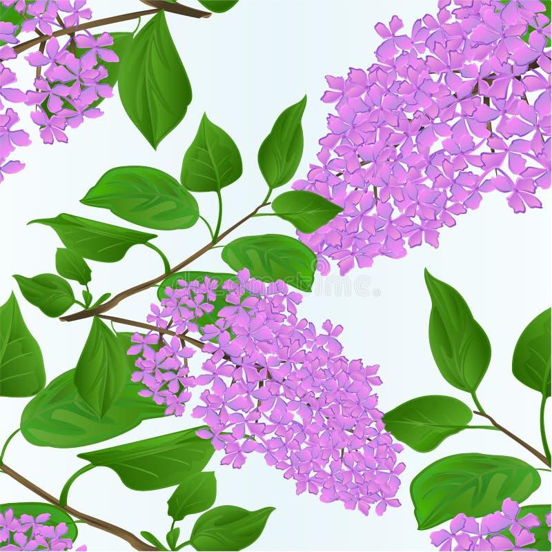 La ramita inconsútil de la lila de la textura con la mano del ejemplo del vector del fondo natural del vintage de las flores y de ilustración del vector