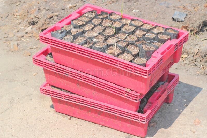 La rangée des sacs de crèche de cendre préparent photos libres de droits