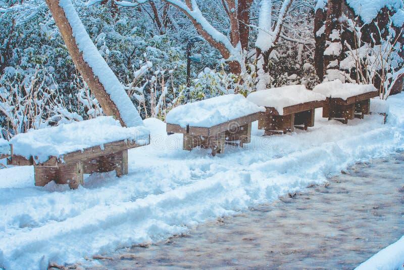 La rangée du long banc en bois et les arbres ont couvert la neige blanche après les chutes de neige fortes près du passage couver photos stock