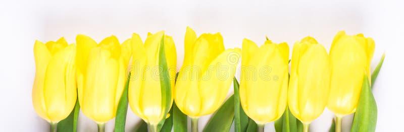 La rangée du ressort jaune fleurit sur un fond clair photographie stock libre de droits