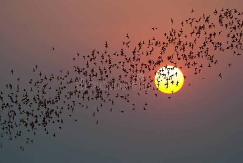 La rangée du vol manie la batte la colonie photographie stock libre de droits