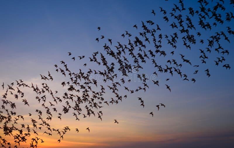La rangée du vol manie la batte la colonie images libres de droits