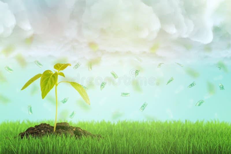 la rappresentazione 3d di un germoglio giovane che cresce su un prato inglese verde fresco e banconote in dollari piove la caduta illustrazione di stock