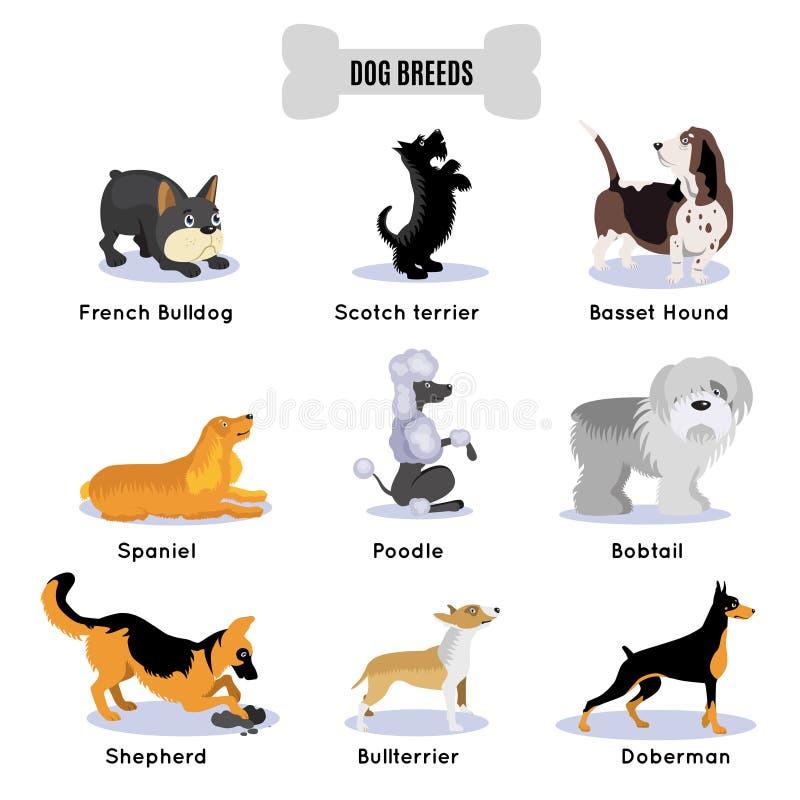 La razza dei cani ha colorato l'insieme dell'icona illustrazione vettoriale
