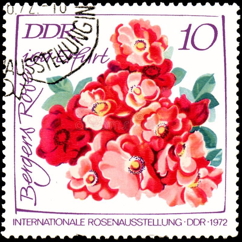 LA RDA - VERS 1972 : le timbre-poste imprimé en RDA montre l'image de Bergers Rose images stock