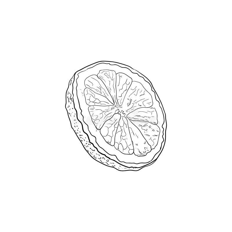 La rebanada del limón del vector, ejemplo exhausto de la mano del ingrediente de la limonada, dibujo de esquema aisló stock de ilustración