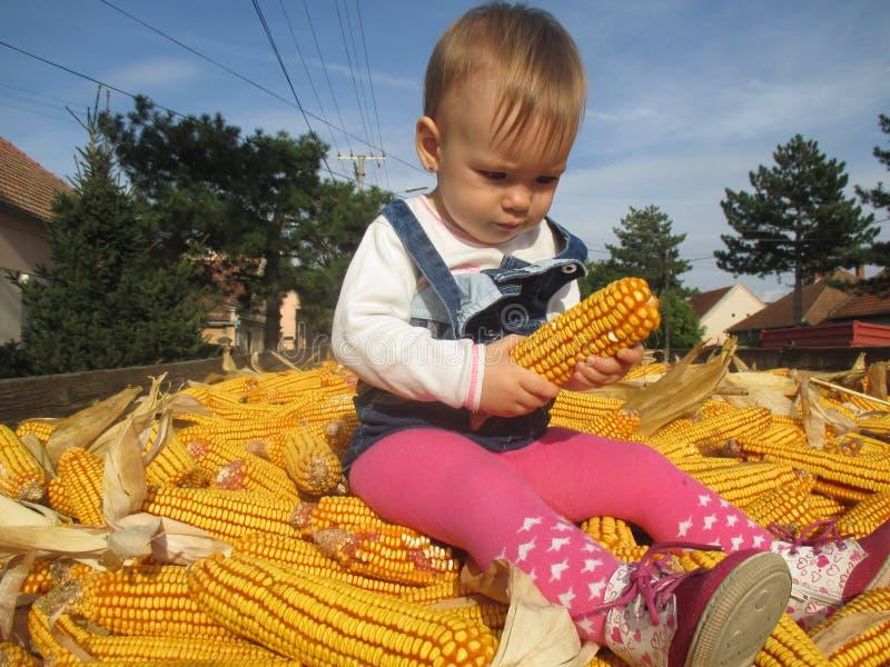 La recherche et les petites filles rencontrent d'abord avec du maïs photo stock