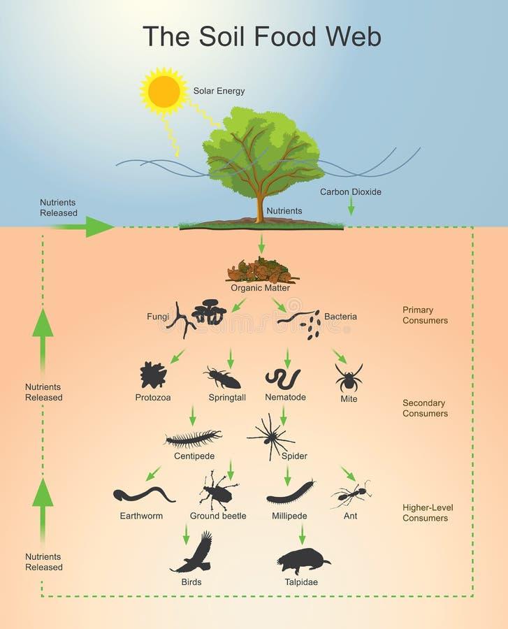 La red alimentaria del suelo ilustración del vector
