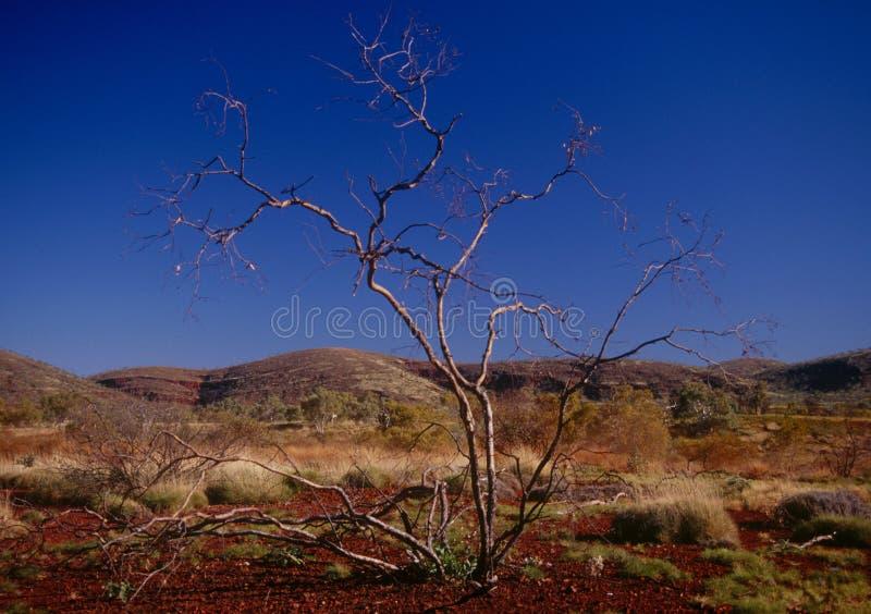 La regione di Pilbara di Australia occidentale fotografia stock libera da diritti