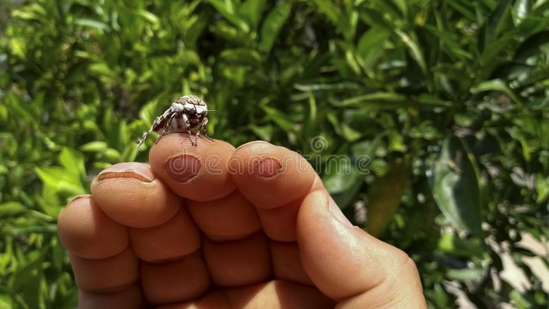 La relación entre el ser humano y el insecto hermosos fotografía de archivo libre de regalías
